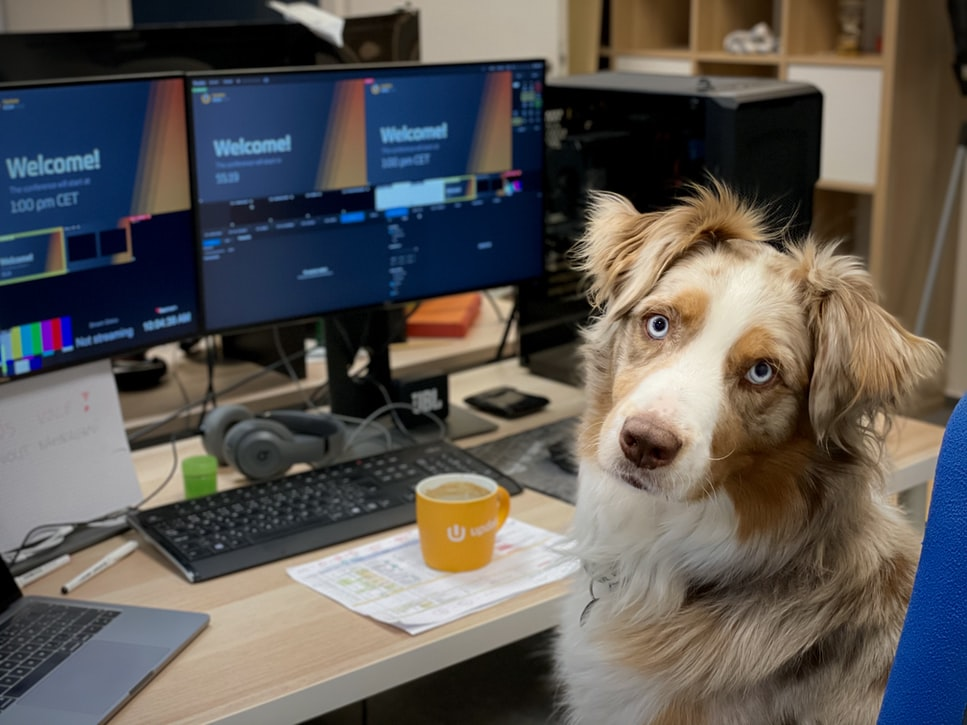 Dog at computer desk